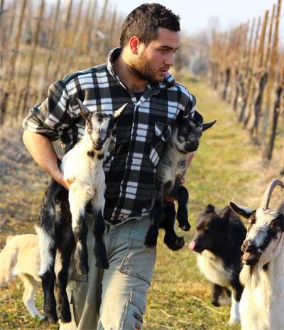 pastore con capretti