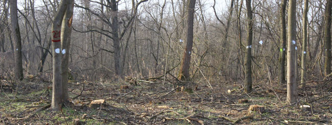 alberi rimasti
