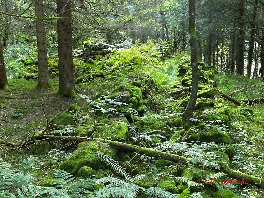Mulattiera tra boschi quasi dimenticati