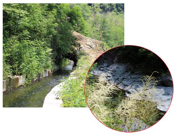 Canale artificiale che scorre parallelo al torrente Mastallone. Località Aniceti, presso Varallo.