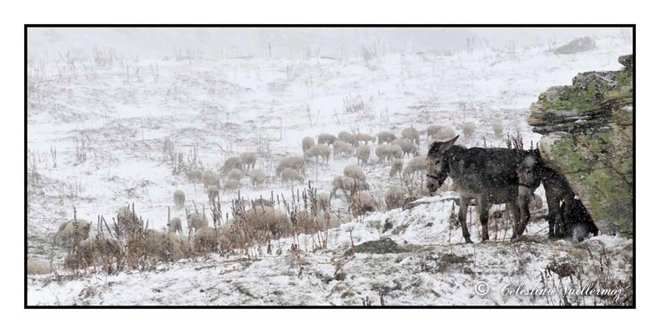 Cade la prima neve sui pascoli - Gran San Bernardo
