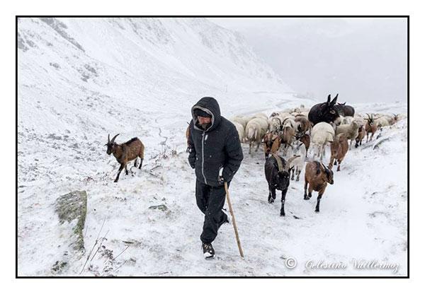 In marcia verso il fondovalle, tra le prime nevi...