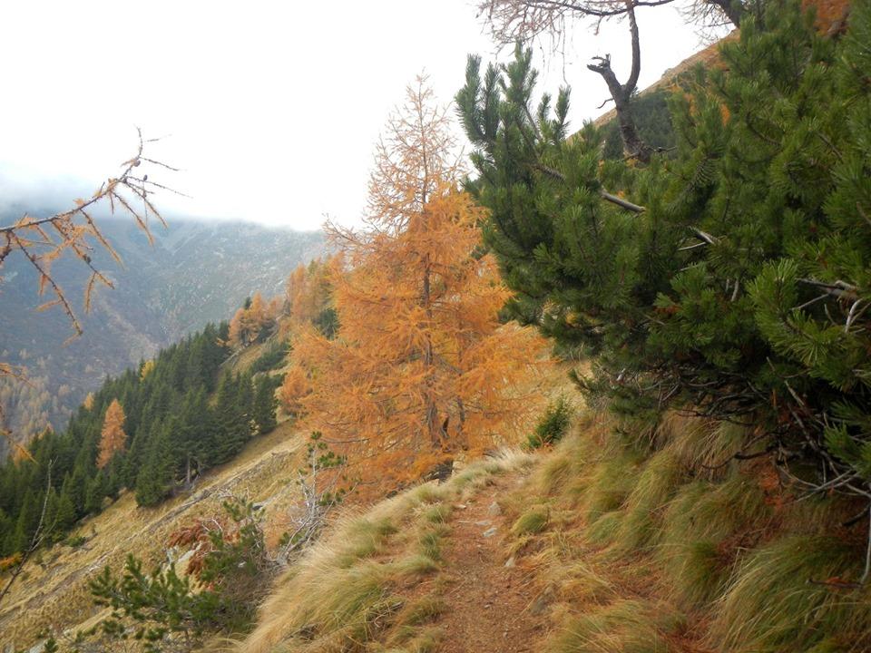 Conifere verso il colle del Termo, fine ottobre