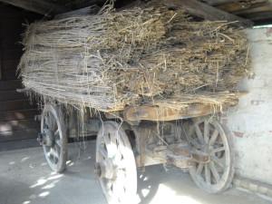 Canapuli ammassati su un carro