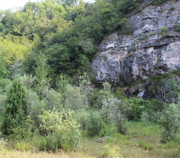 Fronte di cava colonizzato da piante pioniere.