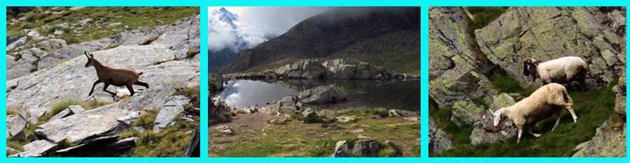 Fotocomposizione con laghetto naturale, camoscio e pecore.