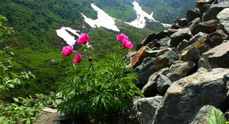 Veduta della valle dalla pietraia delle peonie.