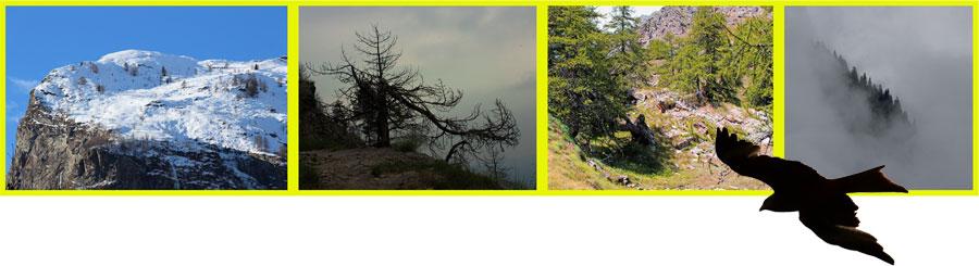 Fotocomposizione: verso il limite altitudinale del bosco