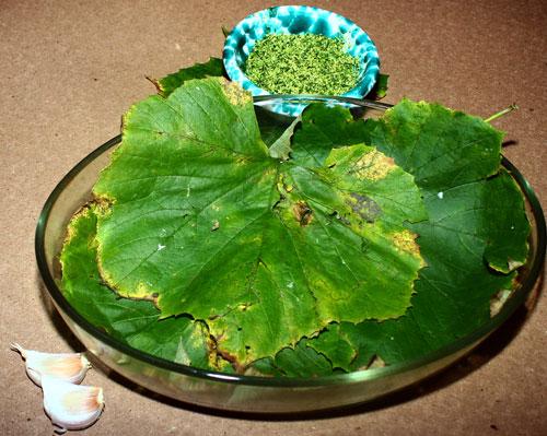 2: ungere le foglie di vite selvatica con olio di oliva