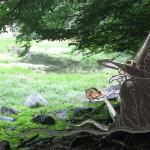 Strega con coppia di rospi