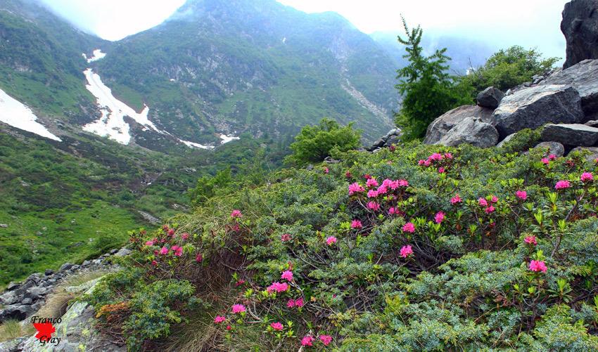 Rodendri, ginepri e arbusti - Alta Val Sorba