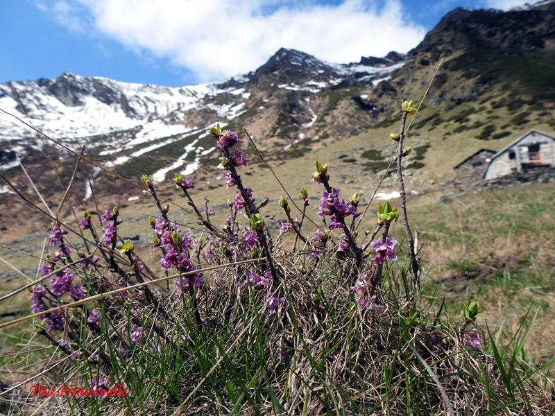 1800 m slm - Valle del Lampone