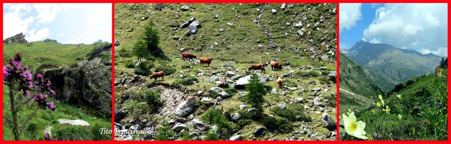 Fotocomposizione Tito Princisvalle - Aspetti alpeggi Valsesia