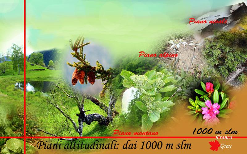 Altitudine, clima e vegetali