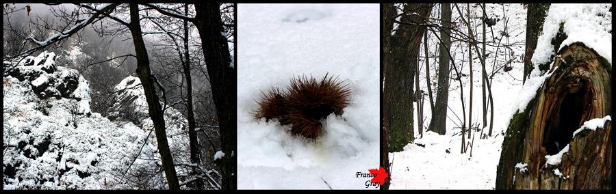 Fotocomposizione con bosco in inverno