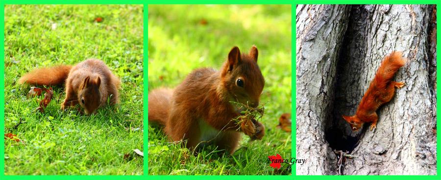 Focomposizione con scoiattoli