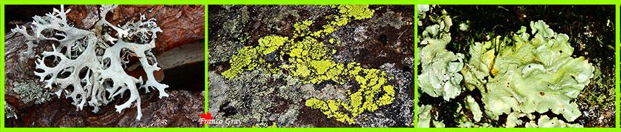 Licheni di corteccia e di roccia