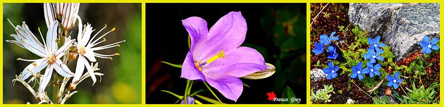Fotocomposizione con fiori selvatici