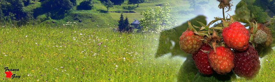 Prato stabile. radura tra i monti, a sinistra: lamponi  (Fotoelaborazione: Franco Gray)