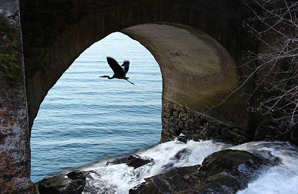 torrente arrivato al mare
