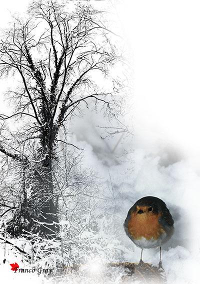 Inverno, pettirosso tra la neve (Fotoelaborazione: Franco Gray)