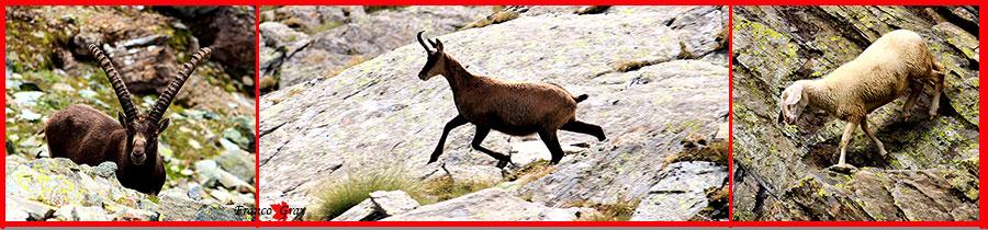 Fotocomposizione con animali che possiamo trovare in montagna