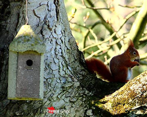 Cassetta nido e scoiattolo (Foto: Franco Gray)