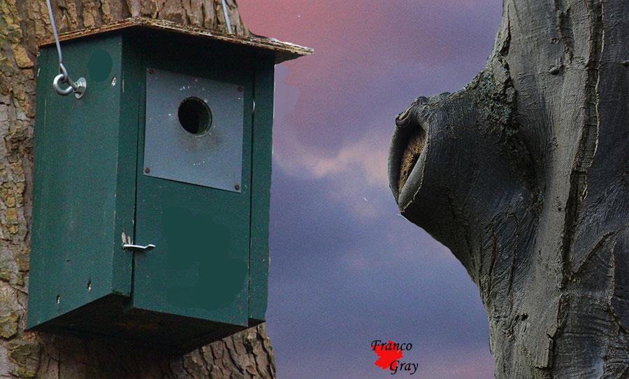 Cassette nido (Fotoelaborazione: Franco Gray)