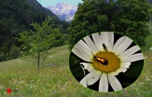 Val Vogna, prato e microlepidotteri