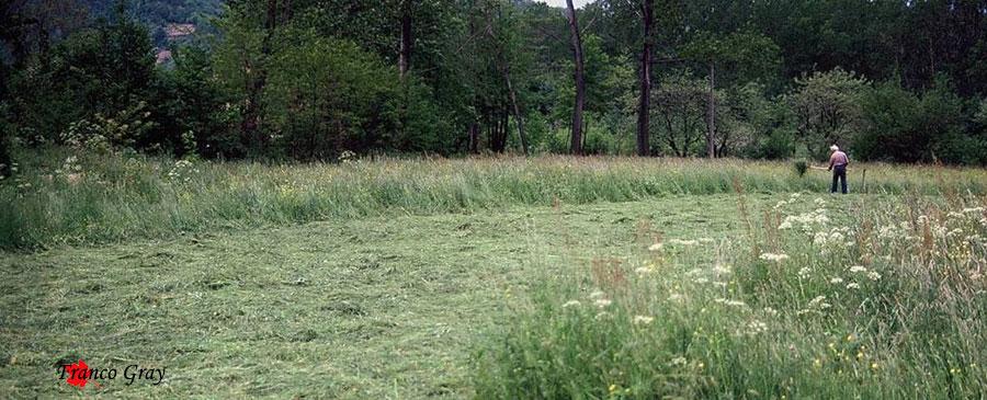 Fienagione manuale: si sparge l'erba appena falciata con una forca bidente