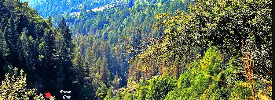 Valle Vogna, settembre. I boschi visti dallo sterrato verso la Frazione Peccia.