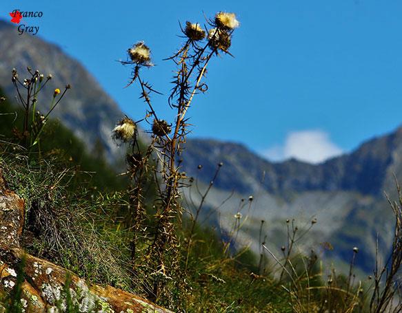 Un aspetto della Valle Vogna a circa 1400 m slm. - Fine settembre