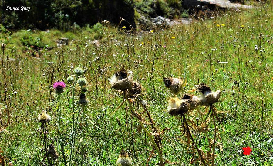 Un pascolo a settembre con gli ultimi fiori