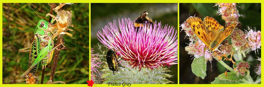 Fotocomposizione con insetti tra erbe, cirsi e menta in fiore