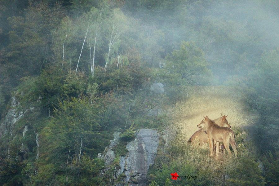 Fotoelaborazione - versante montano sferzato dalla pioggia, lupi