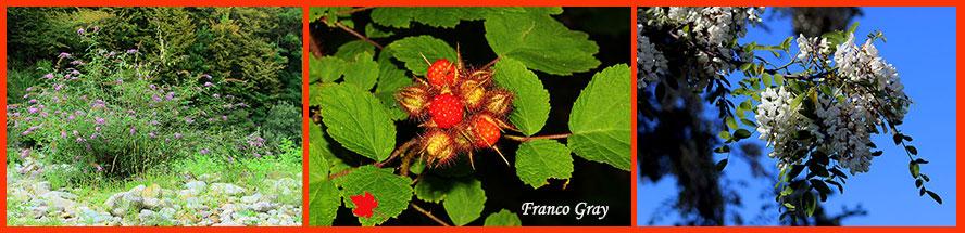Fotocomposizione con piante alloctone