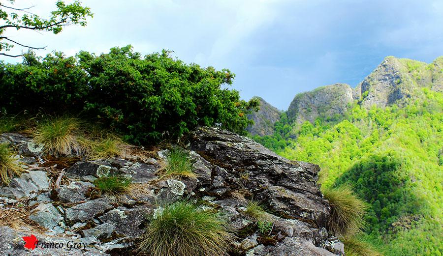 Sul dirupo, un vigoroso ginepro abbarbicato alla roccia (