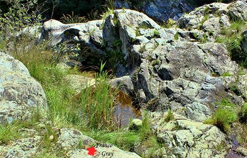 Ponte dei Dinelli - Erbe e arbusti intorno alle rocce (Franco Gray)